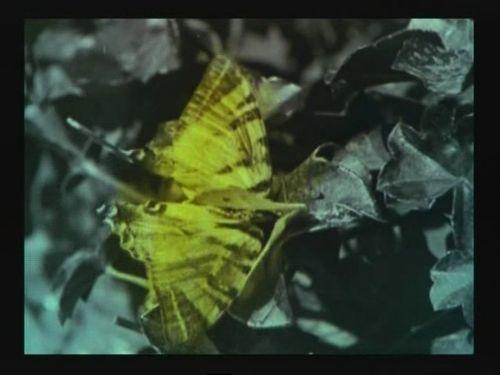 RapsodiaSatanica_butterfly