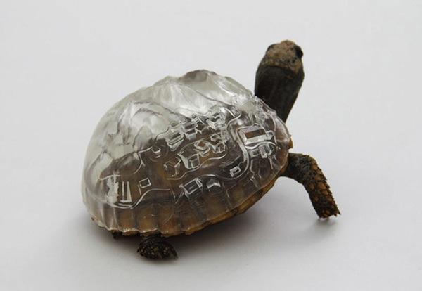 Aki-inomata-turtle