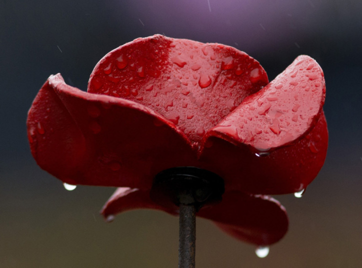 Ceramic_poppies_2