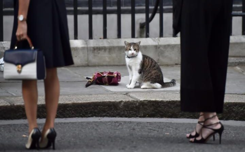 LarrytheCat_10DowningStreet_EDIT