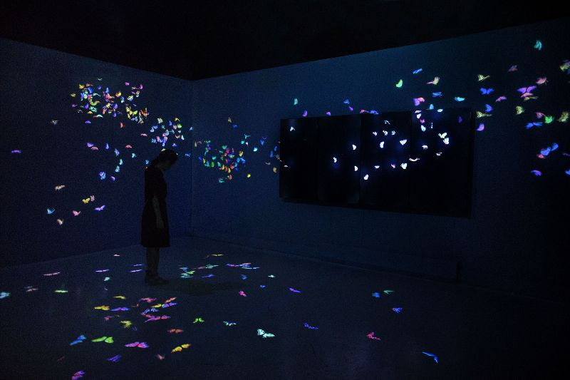 TeamLab_butterflies
