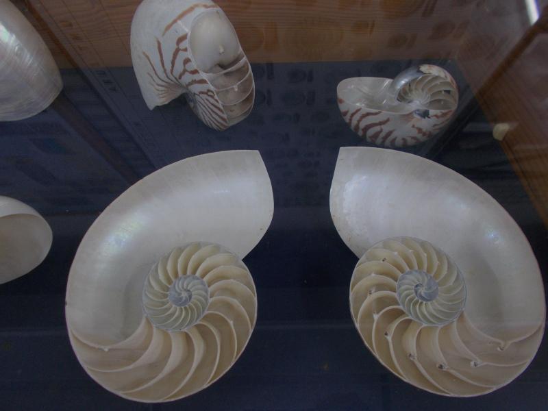 MuseoMalacologia_CupraMarittima_Part1_byAnnaBattista (37)