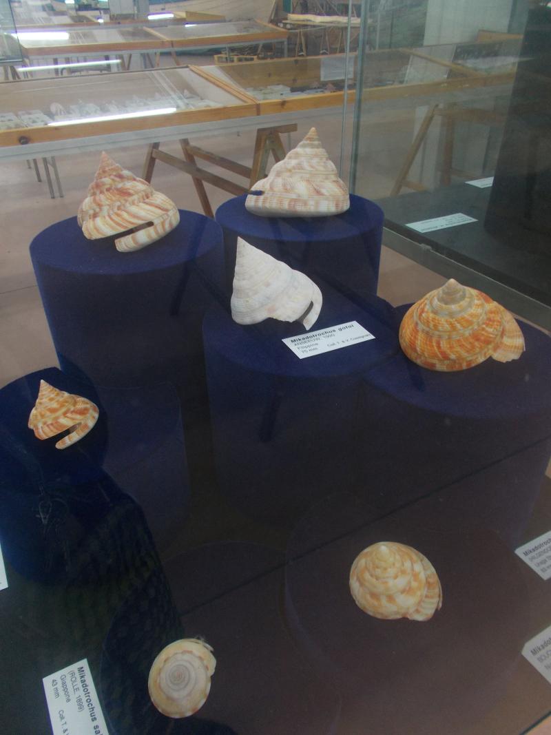 MuseoMalacologia_CupraMarittima_Part1_byAnnaBattista (78)