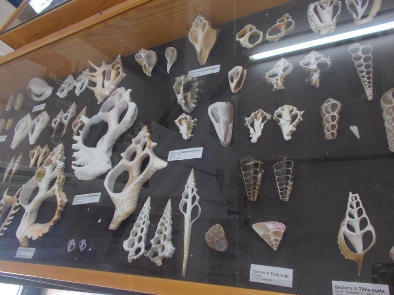 MuseoMalacologia_CupraMarittima_Part2_byAnnaBattista (76)