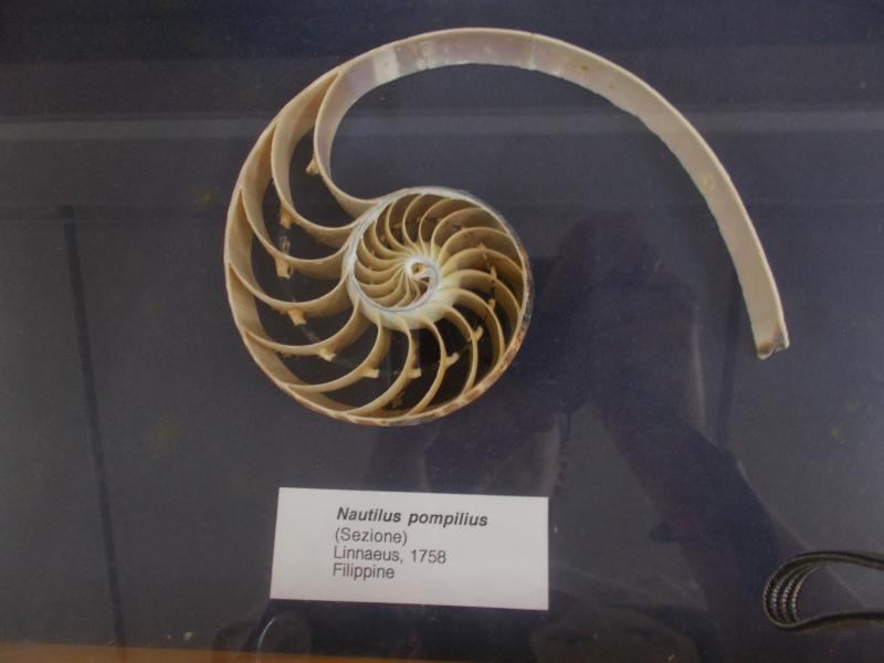 MuseoMalacologia_CupraMarittima_Part1_byAnnaBattista (34)