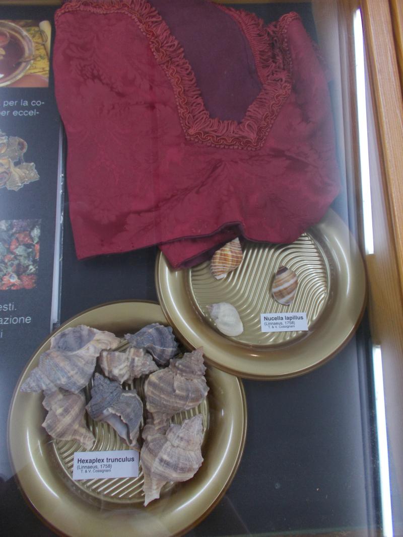MuseoMalacologia_CupraMarittima_Part2_byAnnaBattista (44)