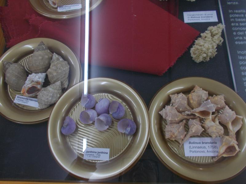 MuseoMalacologia_CupraMarittima_Part2_byAnnaBattista (50)