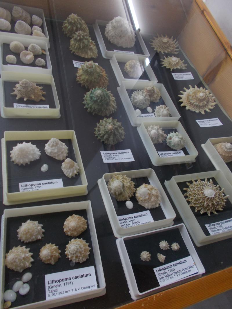 MuseoMalacologia_CupraMarittima_Part1_byAnnaBattista (70)