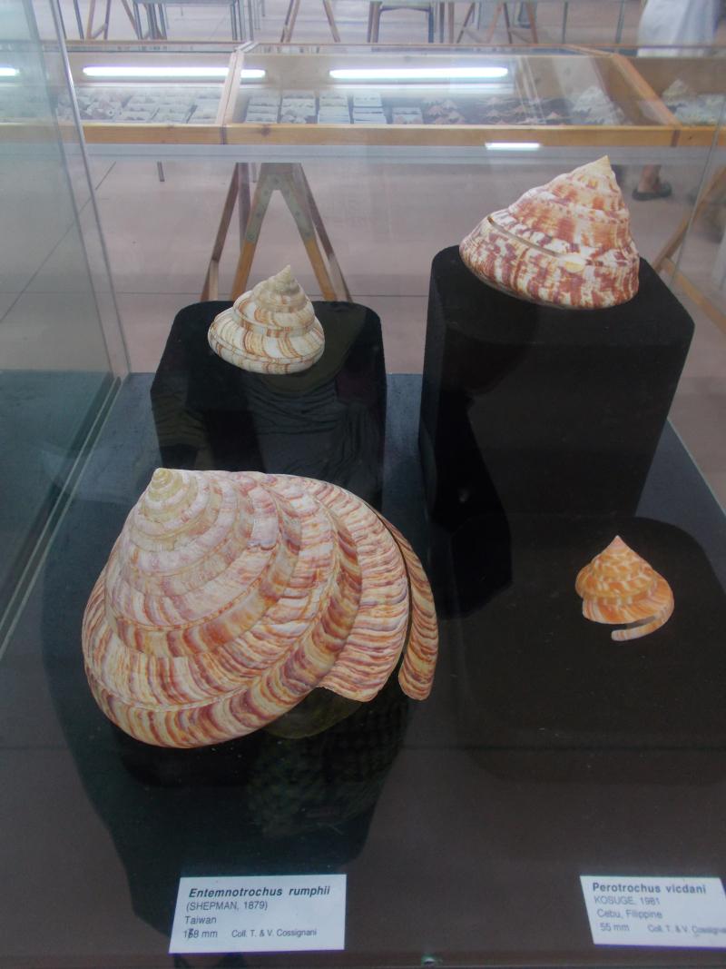 MuseoMalacologia_CupraMarittima_Part1_byAnnaBattista (80)