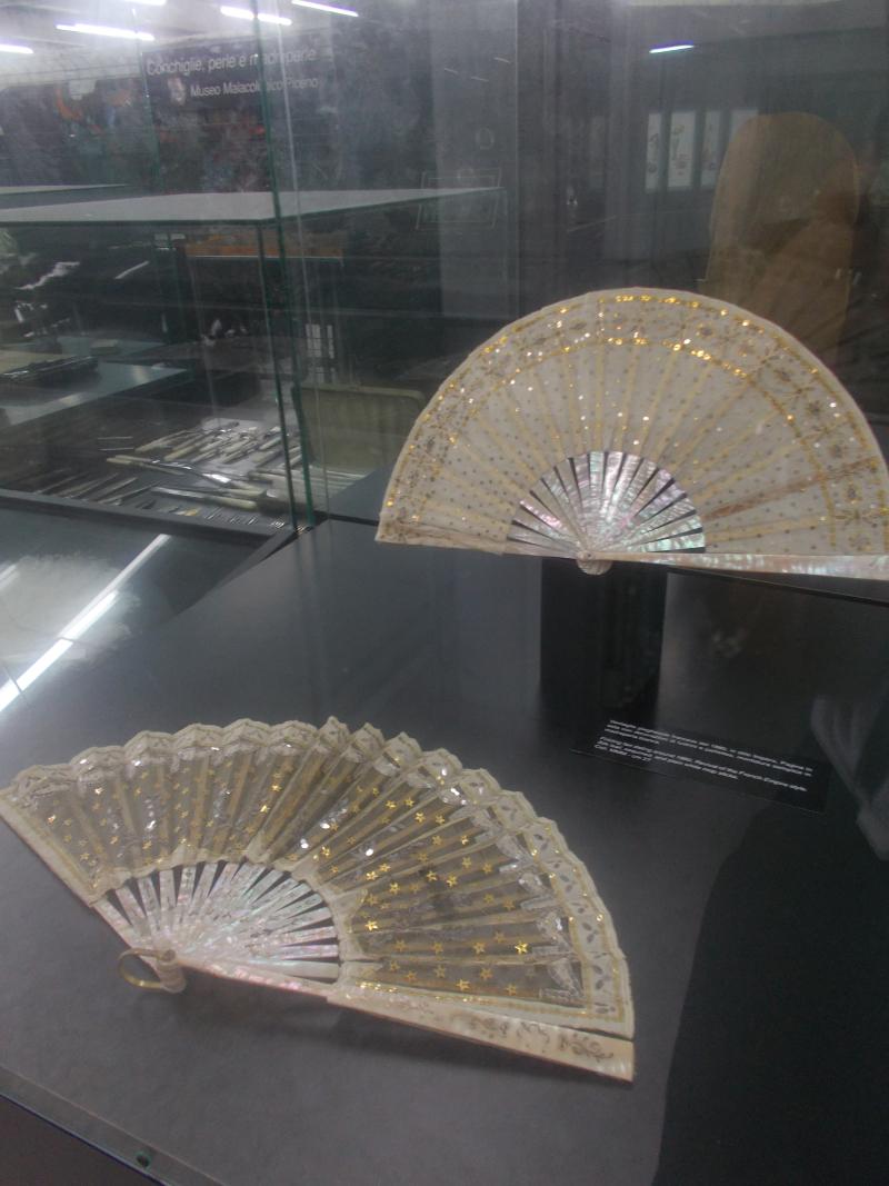 MuseoMalacologia_CupraMarittima_Part2_byAnnaBattista (220)