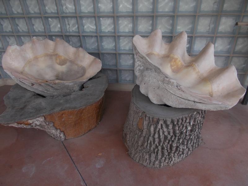 MuseoMalacologia_CupraMarittima_Part2_byAnnaBattista (498)