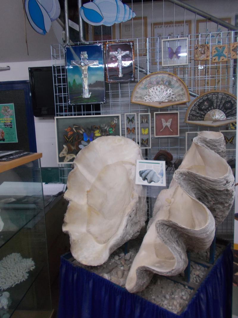 MuseoMalacologia_CupraMarittima_Part1_byAnnaBattista (4)